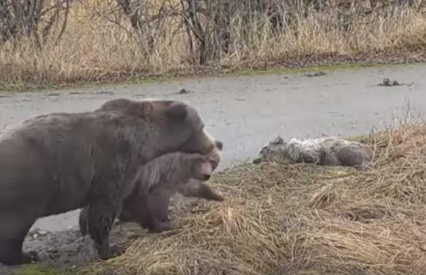 Polar Bear Club - Death Chorus
