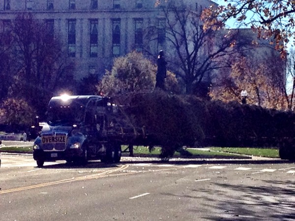 The tree makes its final turn at the Capitol