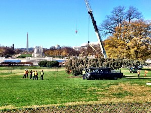 The Alaskan tree arrived at the Capitol but winds kept it horizontal all day