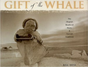 Whaling Photography with Bill Hess