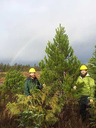 Aaron Steuerwald And Steve Hollis Found The Best Available S Pine Were On Shoal Cove