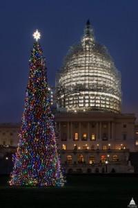Oh, Chugach tree! Soldotna girl flies to DC to light Alaska spruce