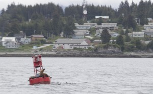 Sea lions sit on a buoy in front of Angoon May 31, 2014. (James Brooks photo)