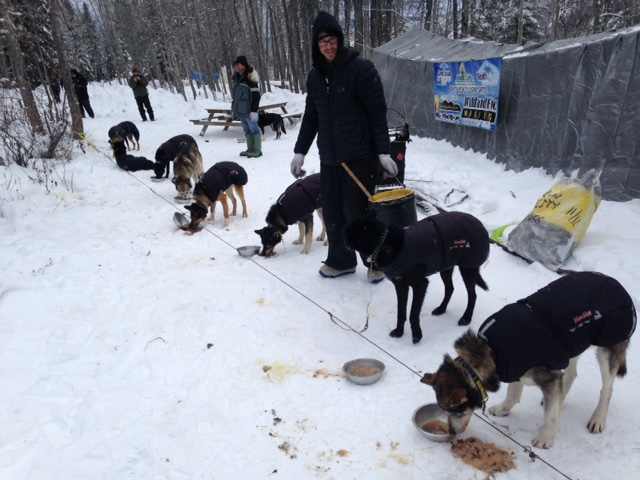 Brent Sass feeding his dogs. (Photo by Molly Rettig, KUAC - Fairbanks)