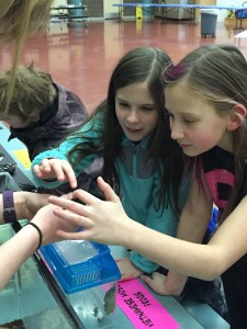 Payton Hammon (r) and Hailey Parmenter (l) play with a hissing cockroach at the Stream Academy preview day. (Photo courtesy of Jennifer Howell.)