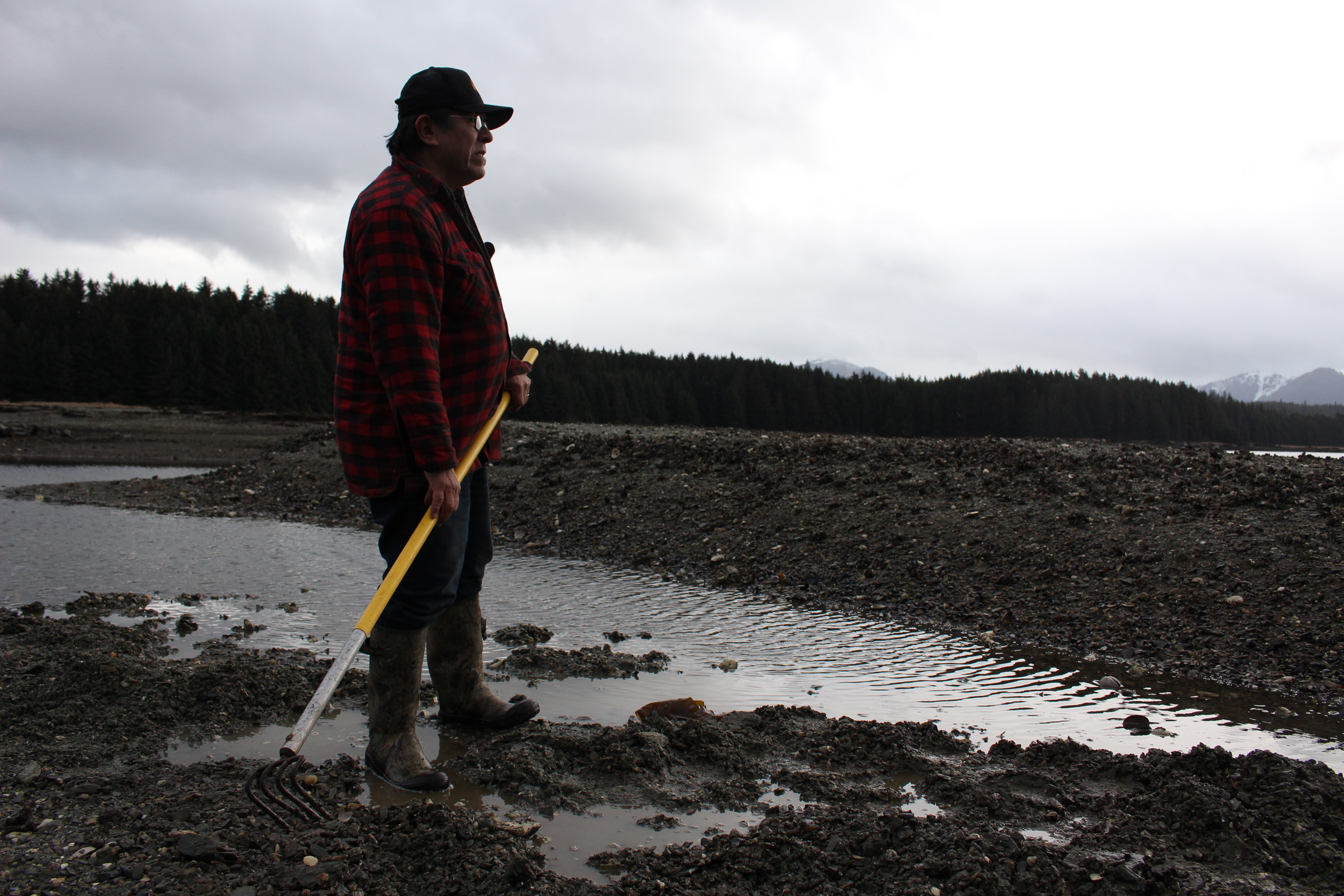 Alan Zuboff comes to these Angoon flats almost every day to dig for cockles. (Photo by Elizabeth Jenkins - KTOO)