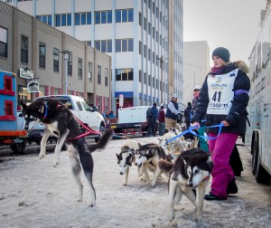 Norri's lead dog Ripp bounces in his harness at the ceremonial start of the Iditarod in Anchorage in 2015. Photo: Zachariah Hughes.