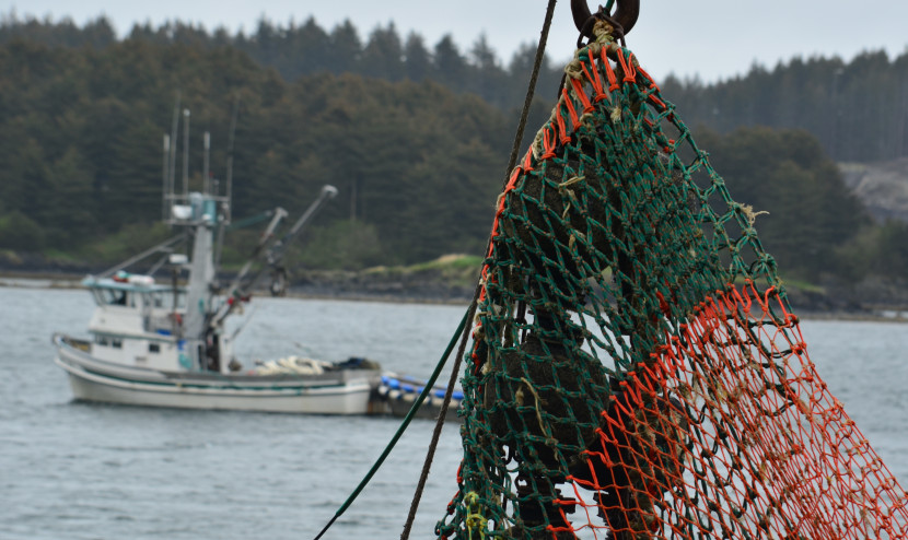 The seiner Jaime Marie sails past other fishing vessels at City Pier 2 in Kodiak on June 6, 2013. (Creative Commons photo courtesy of James Brooks)