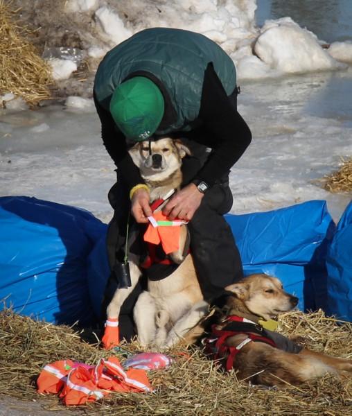 Kelly Maixner bootying a sleepy sled dog before leaving for Shaktoolik. (Photo by Zachariah Hughes/KSKA)