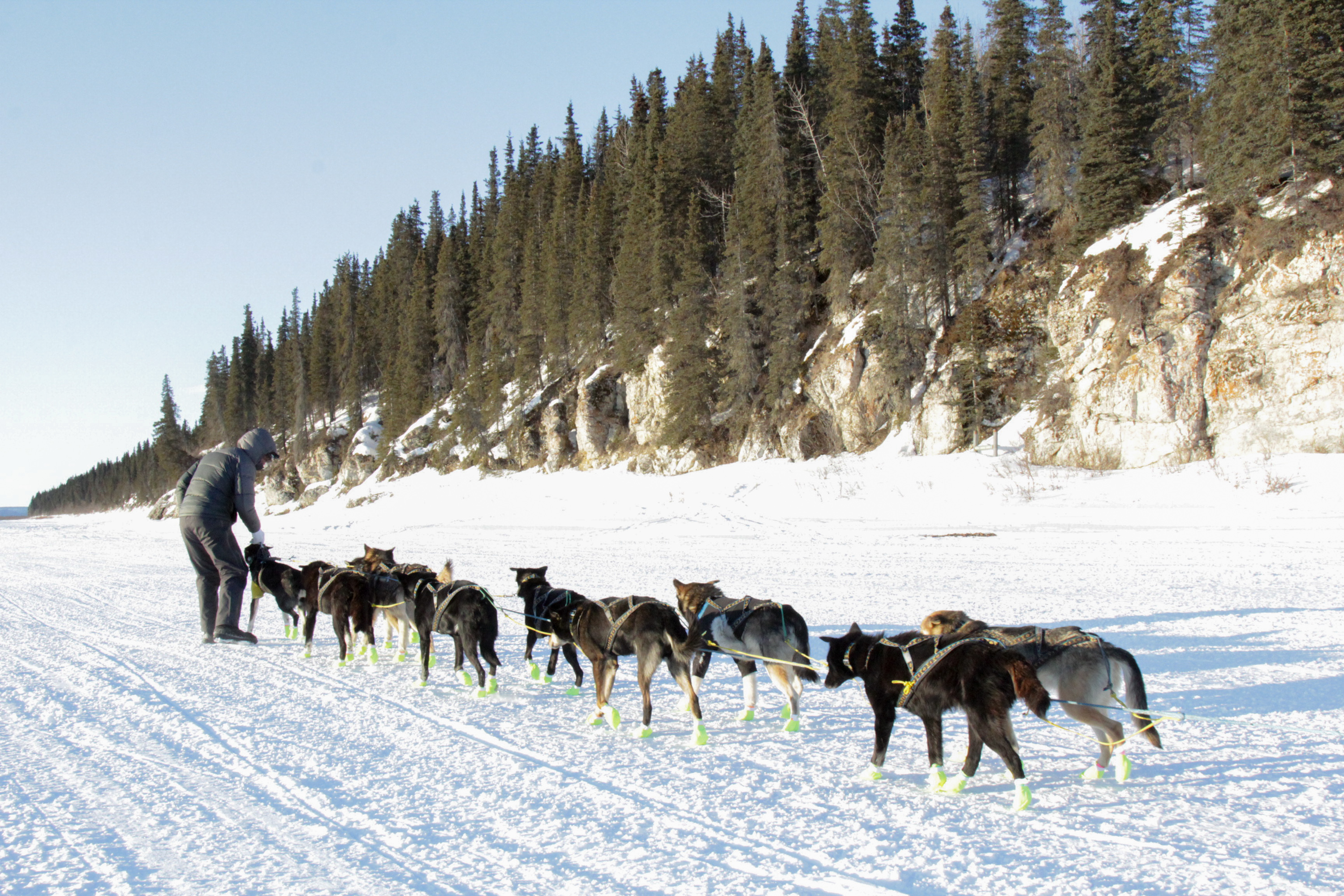 Brent Sass just couldn't get his dogs to leave White Mountain