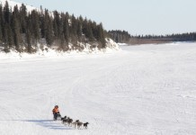 Pete Kaiser mushing into the White Mountain checkpoint. (Photo by Zachariah Hughes/KSKA)