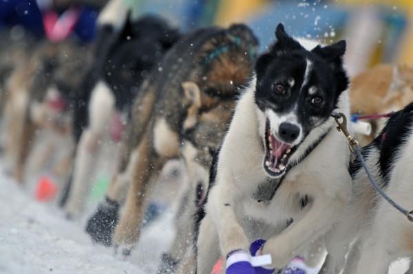 (Photo by Patrick Yack/Alaska Public Media)