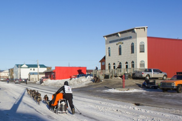 Pete Kaiser, mushing down Front Street. (Photo: Emily Schwing, KNOM)