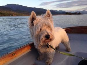 Charles's dog Posey