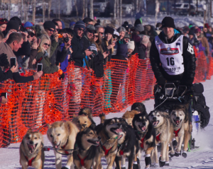 Dallas Seavey, pictured at the Willow restart, is moving towards Noah Burmeister on the Iditarod trail out of Nikolai. (Photo by Ben Matheson / Alaska Public Media.)