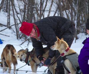 Two Rivers musher Aliy Zirkle reached the Yukon River checkpoint of Galena Friday morning. (Photo by Zach Hughes/KSKA)