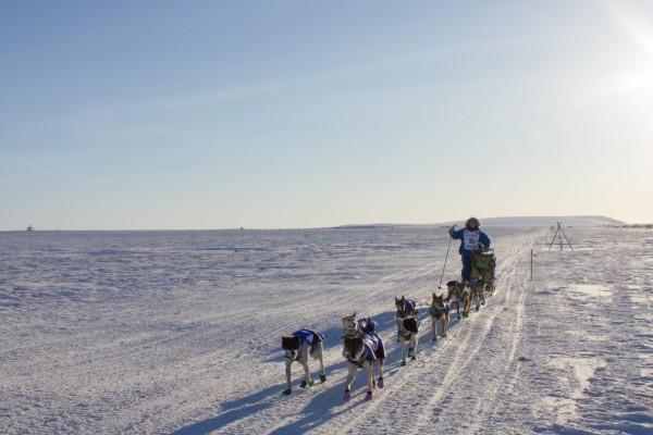 Wade Marrs, Nome, Iditarod, 2016 Iditarod, Iditarod 2016