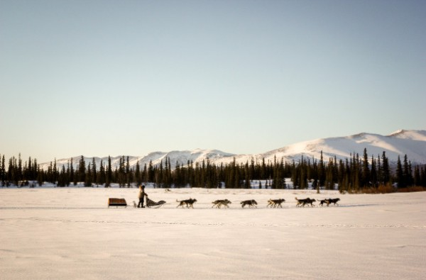 A dog team runs on flat snow with trees behind him and low mountains