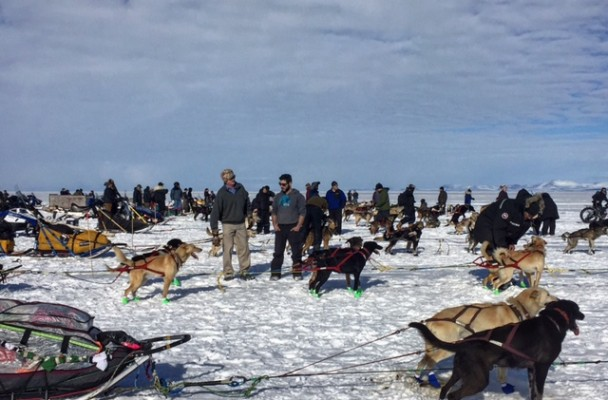 On Thursday, mushers lined out dog teams on the sea ice in Kotzebue for the start of the 2016 Kobuk 440. (Photo by Emily Schwing, KNOM - Nome)