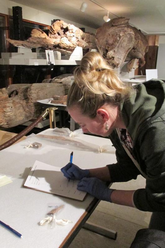 Tara Hofmann measures and catalogs a fragment. (Photo by Maria Dudzak, KRBD - Ketchikan)