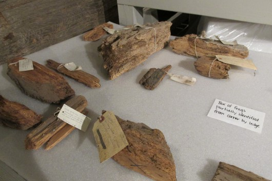Fragments await cataloging. Many have fading, 40-year-old labels. (Photo by Maria Dudzak, KRBD - Ketchikan)