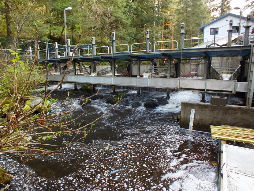 Downstream view of the fish counting weir at Auke Creek that is located north of downtown Juneau. (Photo by Matt Miller/KTOO News)