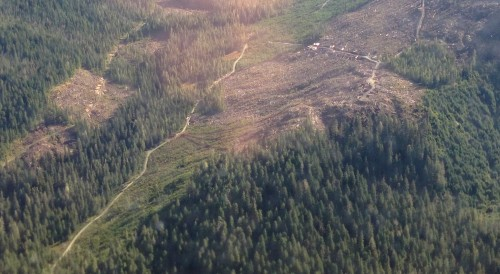 A Tongass National Forest clearcut is shown in this 2014 aerial view. (Photo by Ed Schoenfeld, CoastAlaska News)