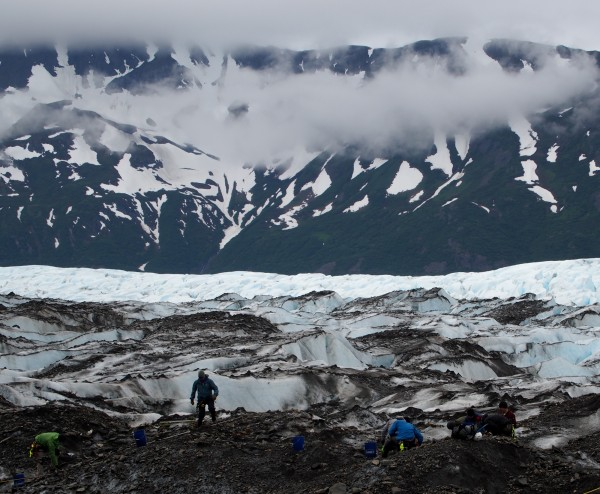 Members of the 11-person crew excavate 40-by-40 meter squares along a grid. Media were kept at a distance from the perimeter, purportedly to keep from inadvertently photographing remains. Photo: Zachariah Hughes, Alaska Public Media.