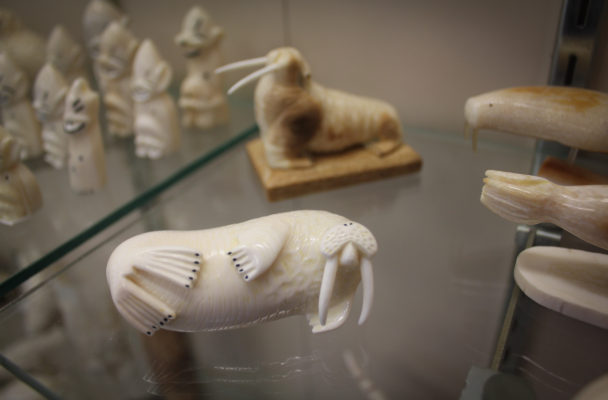 An ivory walrus on display at Maruskiya's in Nome. (Photo by Emily Russell, KNOM - Nome).