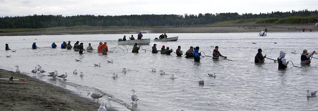 Dip-netters line the north bank of the Kasilof River last week. The sockeye run started slow in returning to the Kasilof. On the Kenai River, by contrast, huge numbers of sockeye greeted dip-netters on opening day July 10. (Photo by Jenny Neyman, KBBI - Homer)