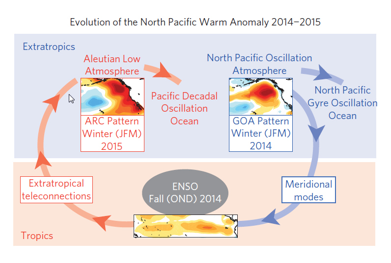 Climate hypothesis to explain the generation, evolution and persistence of the North Pacific warm anomaly between the winters of 2013/14 and 2014/15. (Di Lorenzo & Mantua, Nature Climate Change, 2016)
