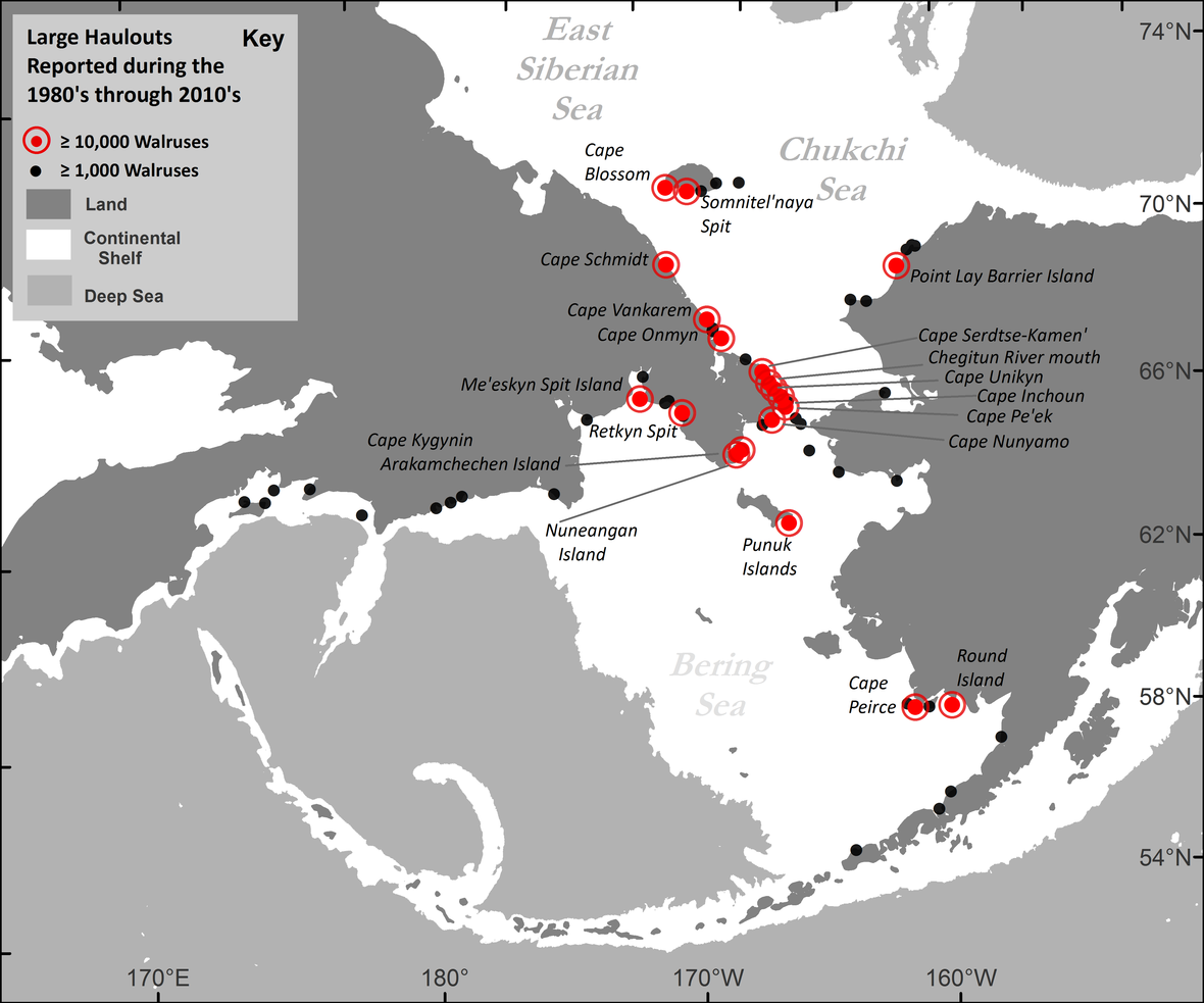 Map showing Pacific walrus coastal haulout locations reported in the past four decades. (Courtesy of USGS.)