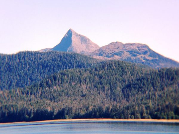 A mountain peak rises above a spruce forest