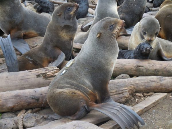 A grey seal sits on a piece of drift wood