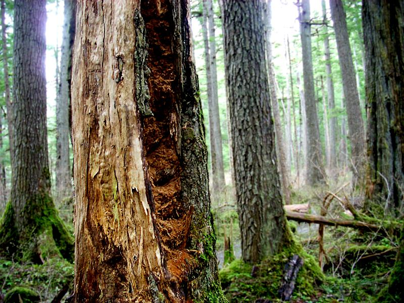 Part of the Tongass National Forest in April 2008. (Creative Commons photo by Xa'at)