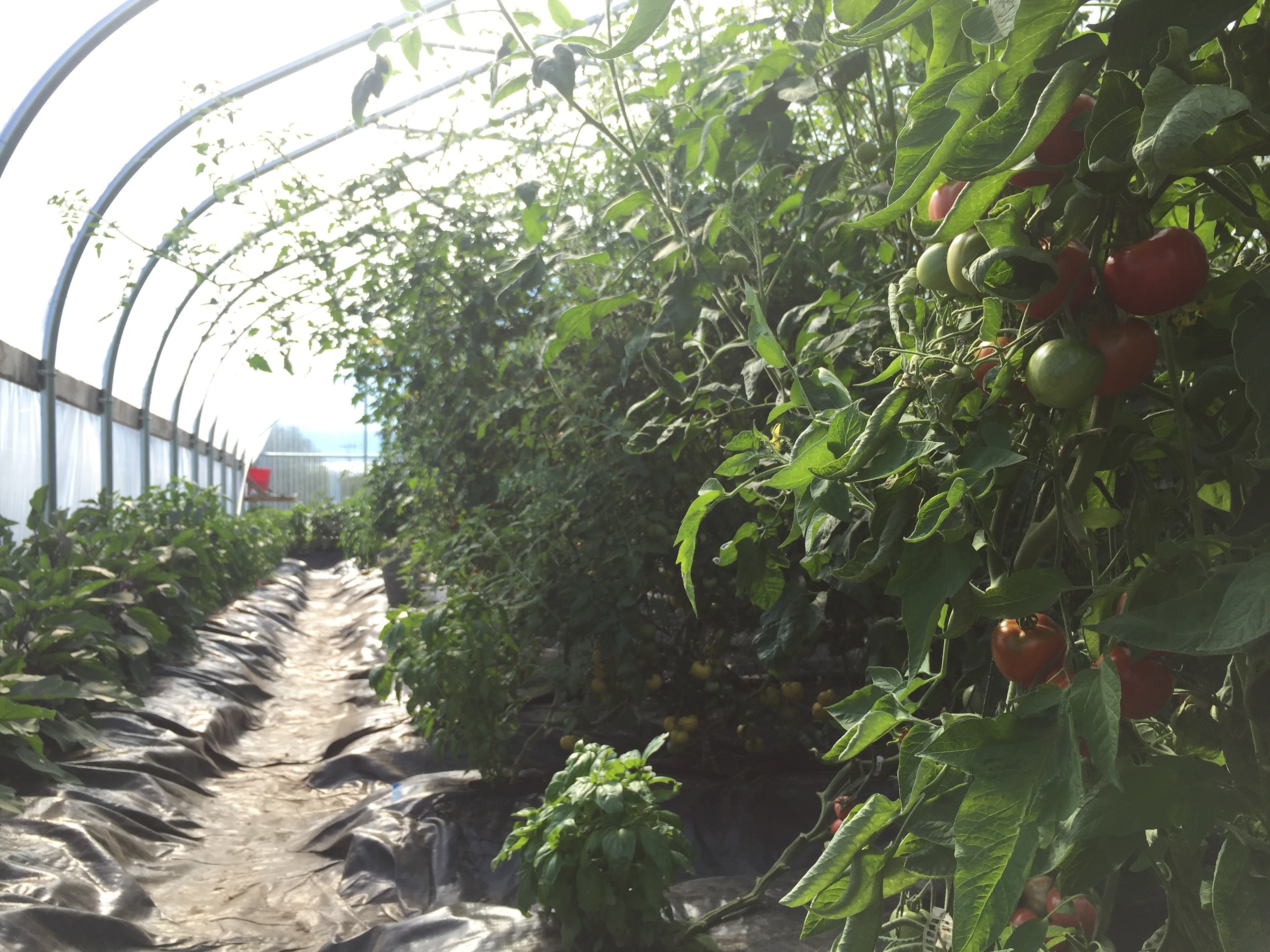AK: High tunnel greenhouses on the Kenai Peninsula - Alaska