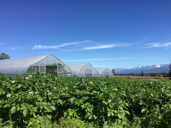 The future of agriculture in Alaska