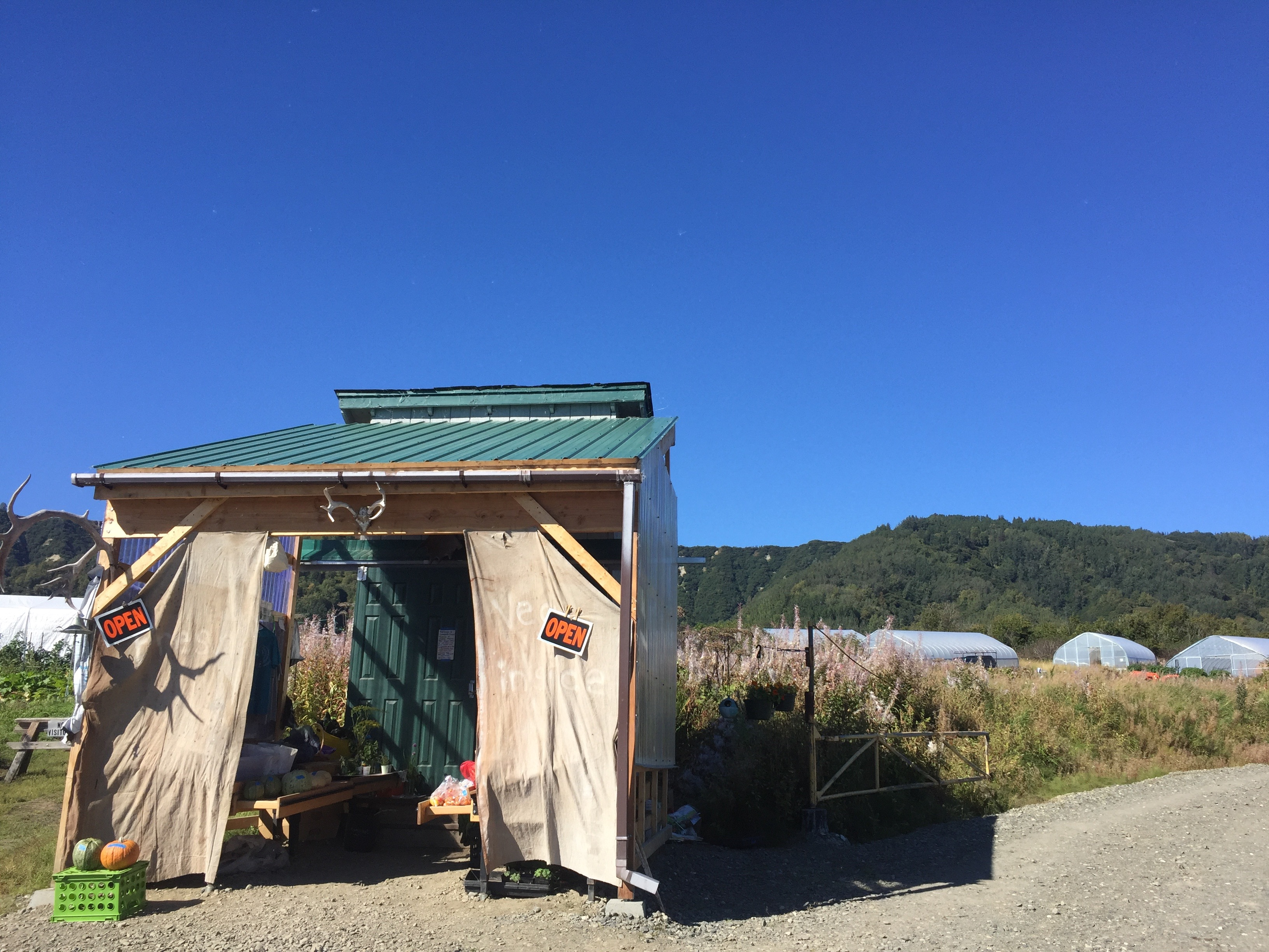 Homer area residents can stop into the roadside farm stand to pick up tomatoes, herbs, squash and many other kinds of fruits and vegetables grown on site at Oceanside Farms. (Photo by Emily Scwing, Northwest News Network)