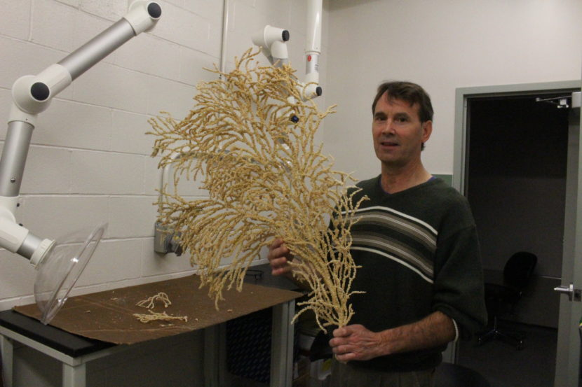 Bob Stone holds a 50 year old red tree coral. (Photo by Elizabeth Jenkins, Alaska's Energy Desk - Juneau)