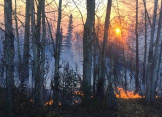 Surface fuels burn in the Moose Creek Fire late Saturday afternoon near Sutton. The fire is now estimated at 216 acres and there are 50 personnel working to suppress it. (Photo by Sarah Saarloos/Alaska Division of Forestry)