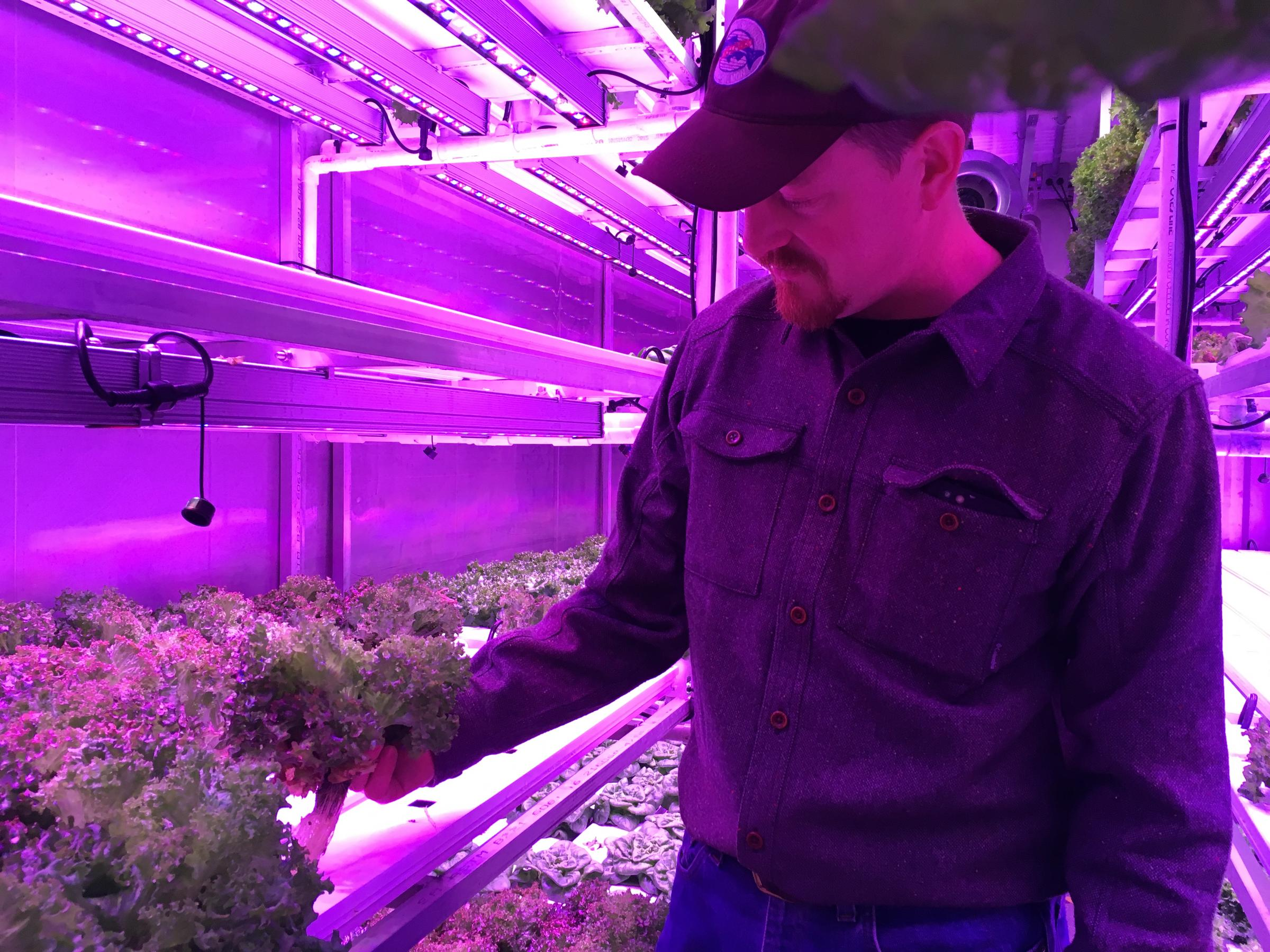 Kyle Belleque in his hydroponic farm (Photo by KDLG)