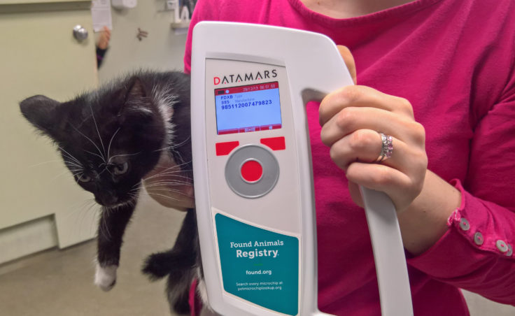 Rachel Trapp shows the readout on a microchip scanner of Sushi the kitten at Gastineau Humane Society in Juneau, Nov. 19, 2016. (Photo by Jeremy Hsieh, KTOO - Juneau)
