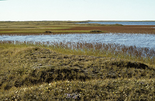Geology gets political as federal scientists pursue new ANWR oil assessment