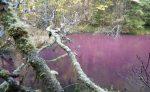 01262018_Pink lake2