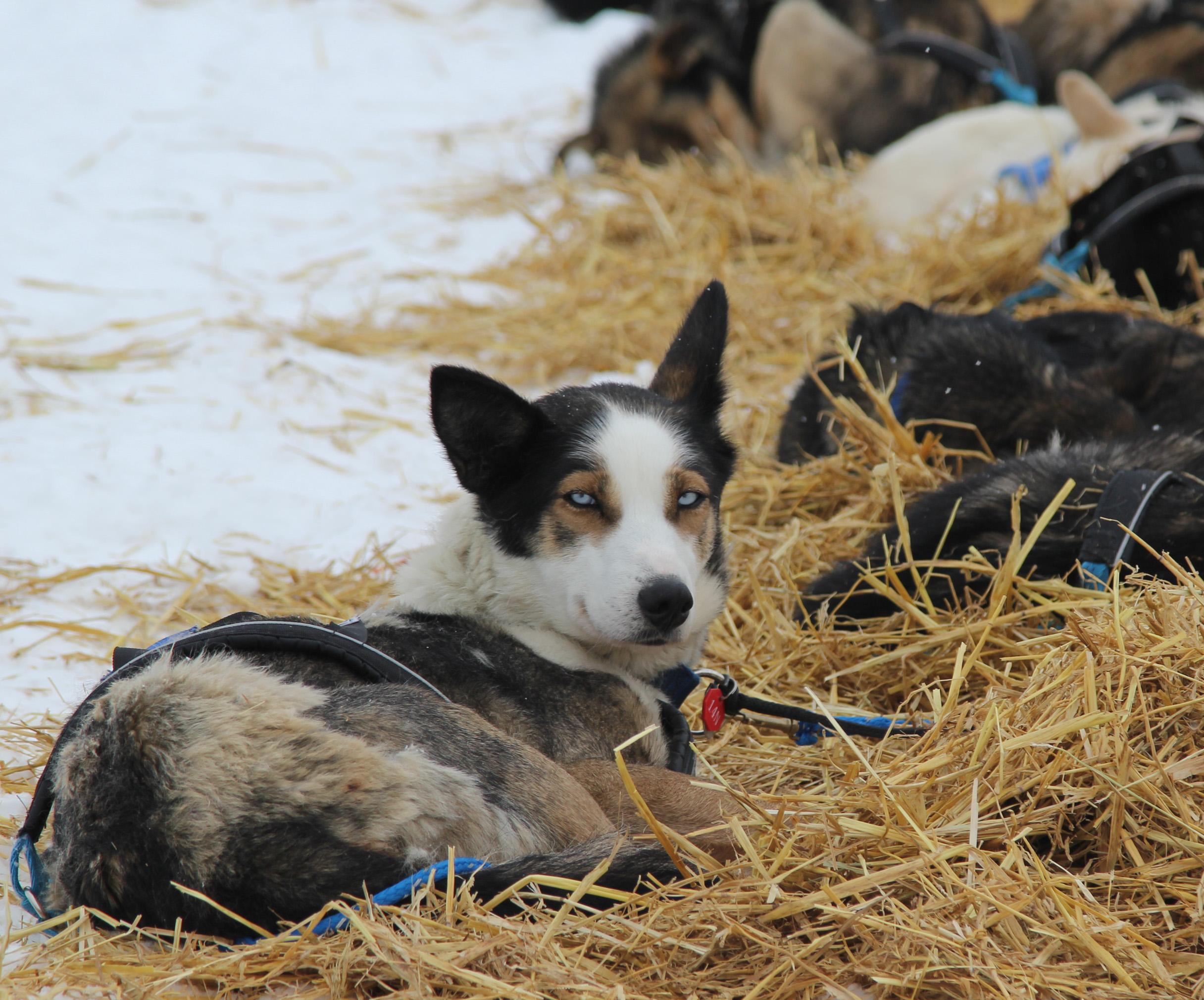 Suficiente Iditarod | Alaska Public Media CC83
