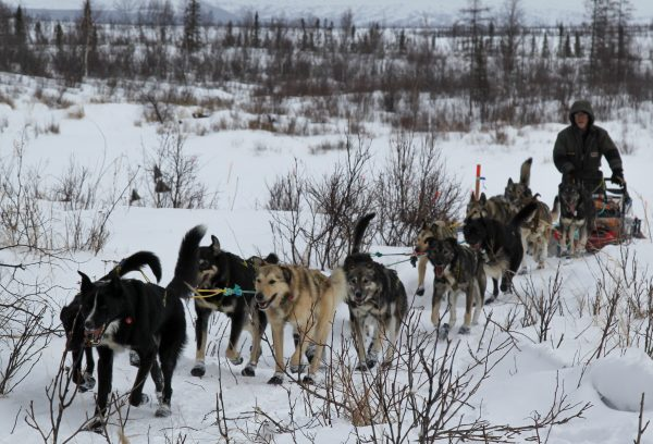 racing toward recovery the extraordinary story of alaska musher mike williams sr