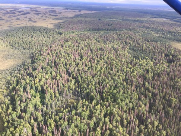 Campground closures as state deals with damage from spruce beetles