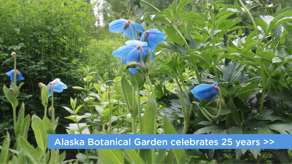 Alaska Botanical Garden celebrates 25 years