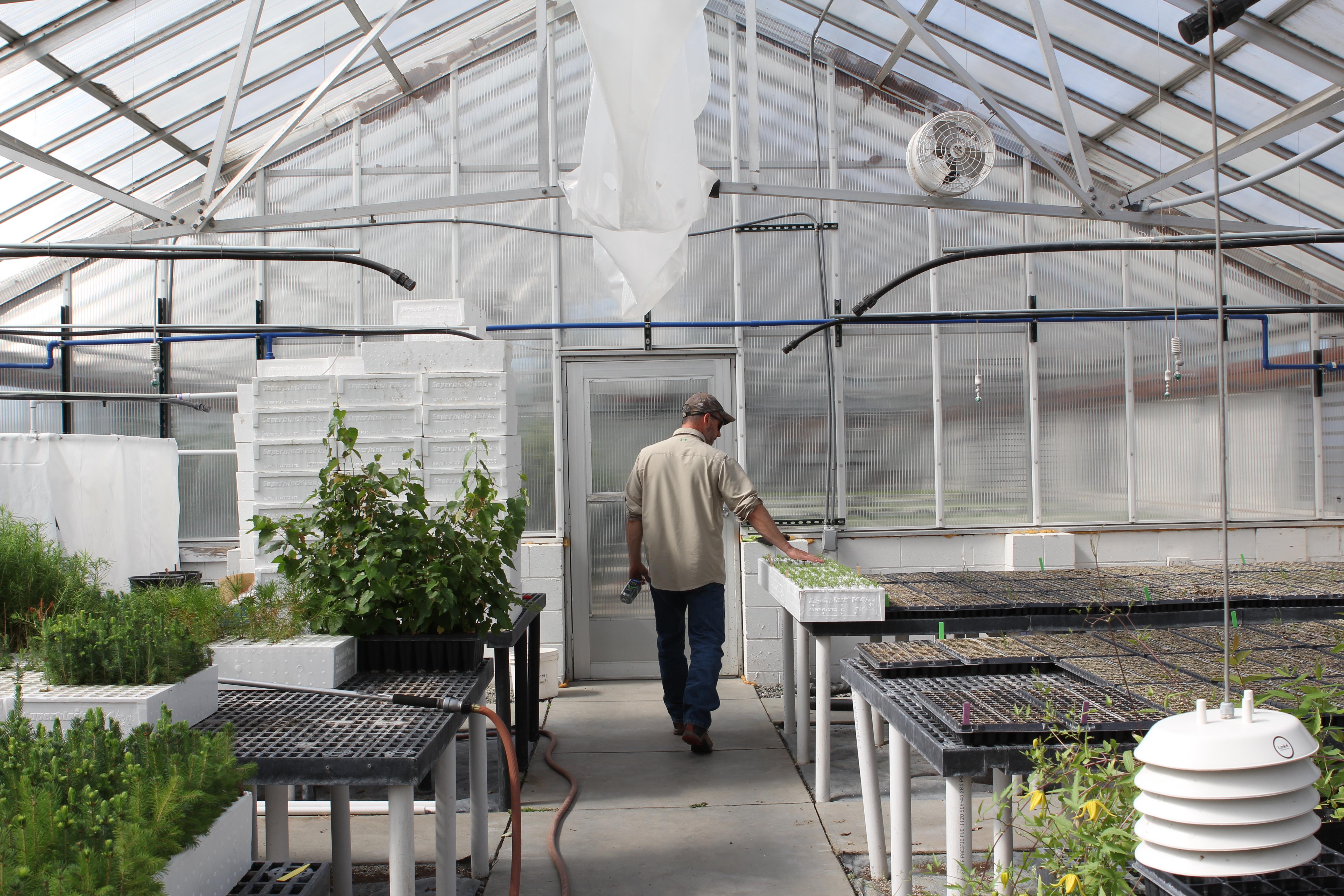 Could industrial hemp become the next big crop for Alaska?