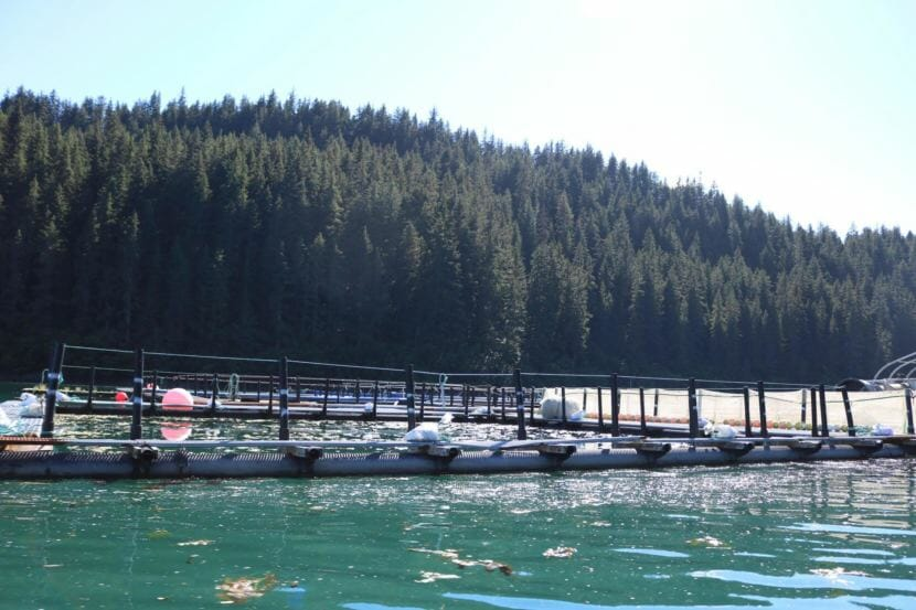 Some Board of Fish members express interest in limiting hatchery production